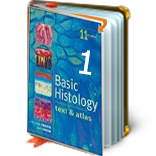 Junqueira's Basic Histology Text & Atlas (14th ed.)